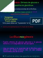 ClaseGluconeogenesis lilliam