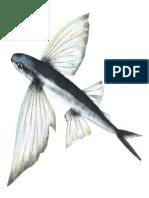Doc1 Ikan Terbang
