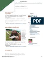 Sistema Digestivo Poligastrico en animales