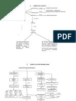 RESUMEN 4 Revisión Genética y Evolución.pdf