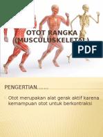 Anatomi Otot 2.pptx