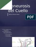 Aponeurosis Del Cuello, Melissa Medicina.