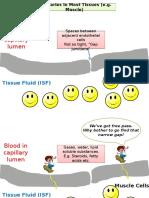 Blood Brain Barrier_10.12.15