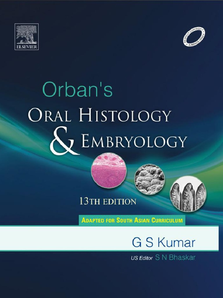 Orbans Oral Histology Embryology 13 Tooth Enamel Human Tooth