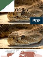 Presentacion de visual de ofidios y culebras