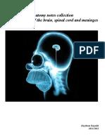 Neuroanatomy notes.pdf