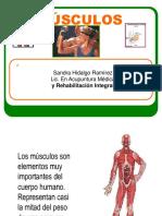 Musculos Completo