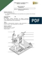 Preparatorio_C1