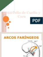 Embriología de Cabeza Cara y Cuello