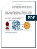 Globulos Rojos - Morfologia