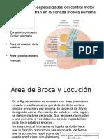 neurología (psicología)