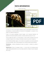 Texto Informativo Monito Del Monte