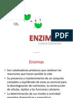 2° tema Bq.2- ENZIMAS