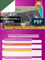 tuberculos (1)