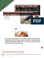 Diarrea Neonatal Aguda Indiferenciada - Bovinos
