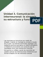 Comunicacion Interneuronal, Estrucutra y Funcion de La Sinapsis