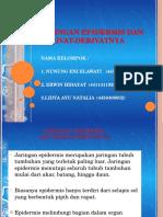 KELOMPOK 6 BIOLOGI MURNI ROMBEL 1 JAR. EPIDERMIS DAN DERIVATNYA.pptx
