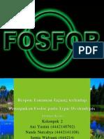 Respon Tanaman Jagung Terhadap Pemupukan Fosfor