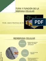 Bio 110 (3), Estructura y Función de La Membrana Celular (3)