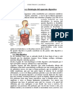 Anatomia y Fisiologia Del Aparato Digestivo
