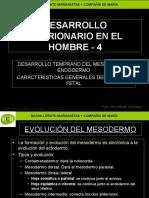 desarrollo-embrionario-humano-4-mcm.ppt