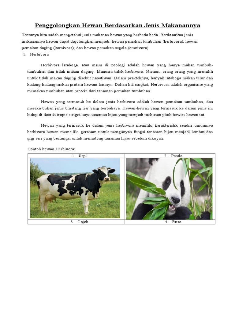 700 Koleksi Gambar Hewan Pemakan Tumbuhan Dan Daging Gratis Terbaru