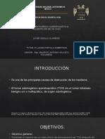 Presentacion Tesina (2) [Bien]
