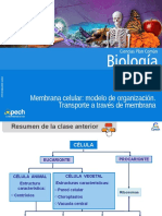Clase 7 Membrana celular modelo de organización.Transporte a través de membrana 2015