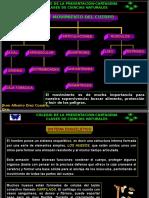 Anatomia Sistemamusculareinmunolgico