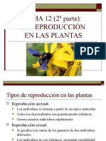 Plantas dispositivas