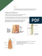 CLASE 3 Generalidades de Artrología.pdf