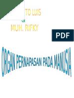 Organ Pernapasan