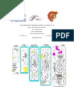 evolucion celular.docx