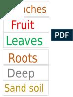 flash cards ghaf tree