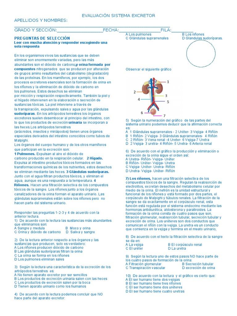 Examen Sistema Excretor