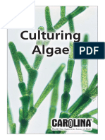 Culturing Algae - Carolina.com