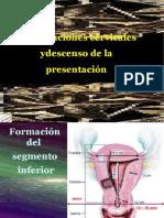presentacion modificaciones cervicales y descenso