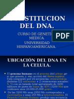 Constitucion Del Dna