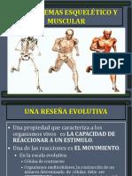 Los Sistemas Esquelético y Muscular
