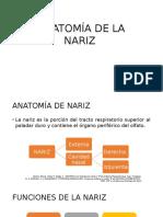 Anatomía de La Nariz