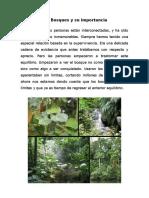Los Bosques y Su Importancia