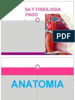 bill roy ferrufino mejia anatomia de esofago