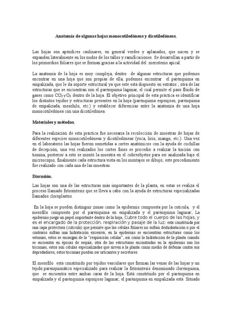 Anatomia de Algunas Hojas Monocotiledone
