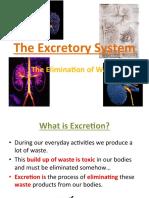 thomson - the excretory system