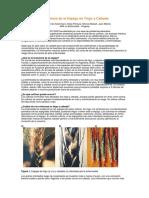INIA Fusariosis de La Espiga en Trigo y Cebada