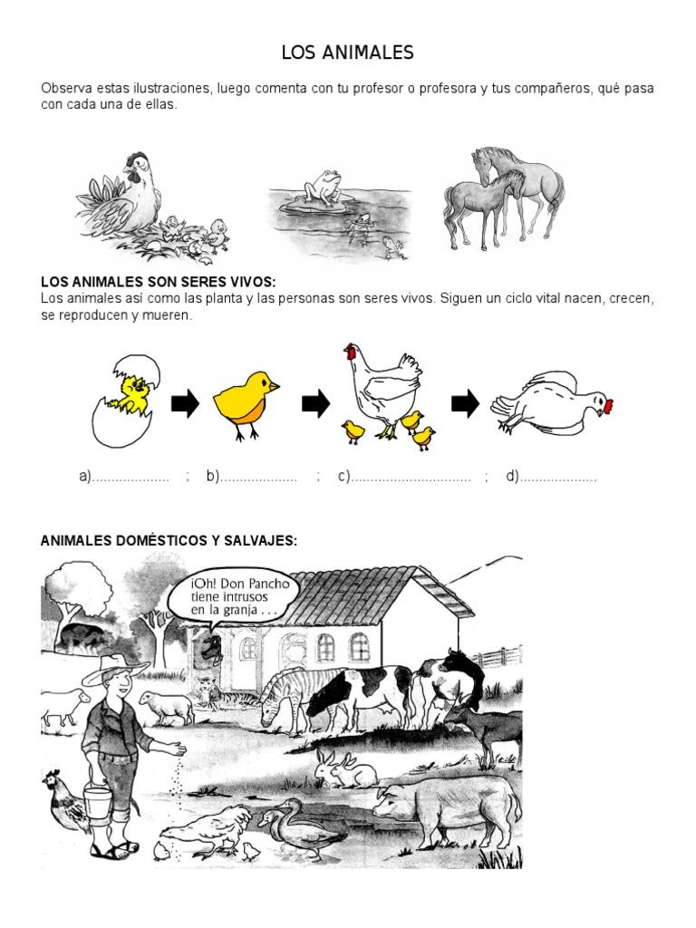 LOS ANIMALES y Su Mundo Primer Grado