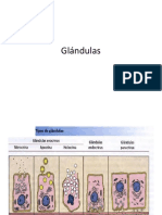 Glándulas. Info