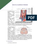 Anatomia de La Glandula Tiroides