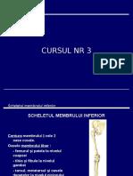 anatomie curs3