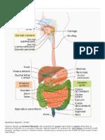 Aparatul Digestiv Wiki